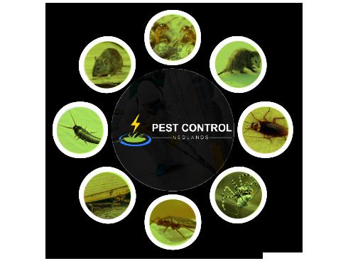 Pest Control Nedlands