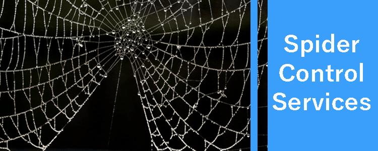 Spider Control Services
